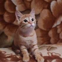 Кошки, в Чите