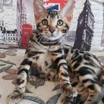 Продается бенгальский котик, в Кирове