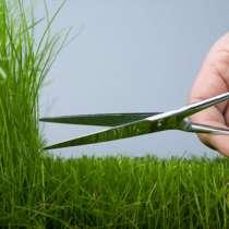 Семена многолетних газонных трав,трав для сенокоса, пастбища, в Ростове-на-Дону