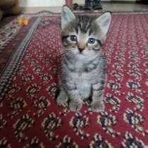 Котенок очень ласковый и игривый станет хорошим другом, в Киселевске