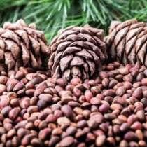 Куплю кедровые шишки и орех, в Улан-Удэ