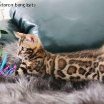 Бенгальский котенок и бенгальские котята от бенгальской кошк, в Челябинске