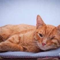 Добрейший солнечный молодой котик Рыжик ищет дом, в Москве