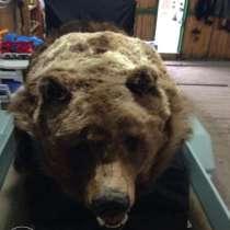 Шкура медведя - 230 см, в г.Усть-Каменогорск