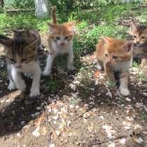 Котята, в Ростове-на-Дону