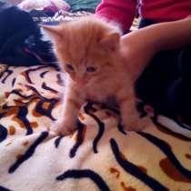 Бесплатно котят, в Ангарске