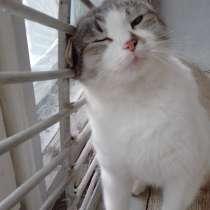 Отдам кошку Милу, в Владимире