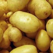 Картофель, урожай 2020, в Краснодаре