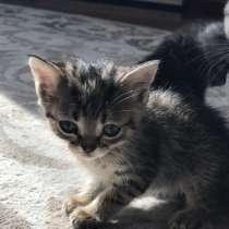 Отдам котят в добрые руки, в Анжеро-Судженске