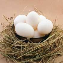 Куриное яйцо, в Кемерове