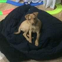Собака, в Ачинске