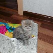 Котята, в Калуге