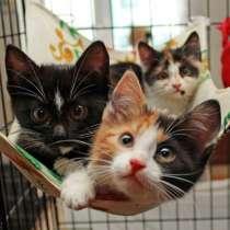 Разноцветные крошки котята 2 мес в добрые руки, в Калуге