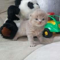 Супер котятки, в Дмитрове