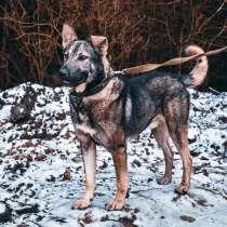 Серый волк снаружи, благородный лорд внутри, в Санкт-Петербурге
