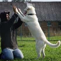 Лорд - необыкновенно красивый почти еще щенок в добрые руки, в Москве
