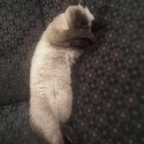 Пропал кот!, в Кольчугине