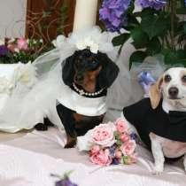 Свадьбы для животных, в Москве