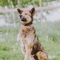 Душевный пес Тор!, в Москве