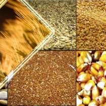Комбикорма, зерно, сено, в Раменское
