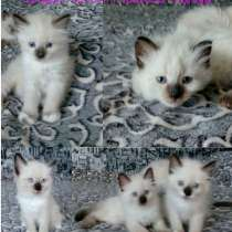 Продам котят, в Иркутске