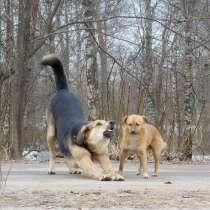 Фото на тему: домашние животные, в Тихвине