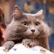 Кошка Ирис, в Москве