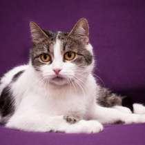 Кошечка Дори ищет дом, в Москве