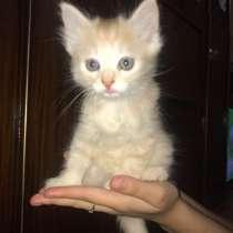 Котята бесплатно 1.5 мес, в Йошкар-Оле
