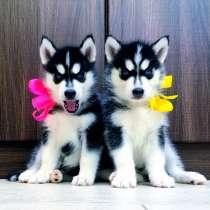 Красивые черно-белые щеночки хаски, в Сызрани