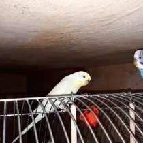 Попугай с клеткой, в Воронеже
