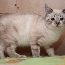 Эксклюзивные котята (6 мес.) в дар, в Москве