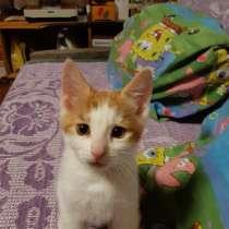 Продам котенка, в г.Кохтла-Ярве