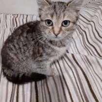 Котенок девочка, в Краснодаре