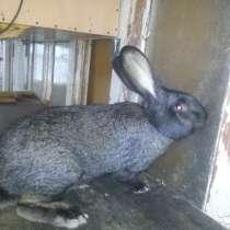 Продам Кроликов, в Симферополе