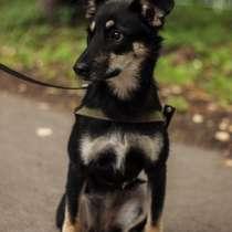 Очаровательная собака в дар, в Рязани