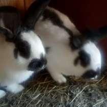 Продаю кроликов, в Смоленске