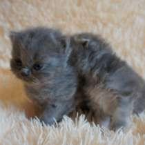 Продажа котят, в Ярославле