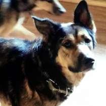 Умнейший пёс Сеня ищет любящую семью, в Москве