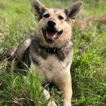Активная, энергичная собачка Лада ждет хозяина, в Москве