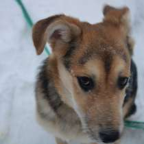 Аврора - счастье щенок ищет дом, в Москве