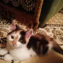 Котята в добрые руки, в г.Пинск