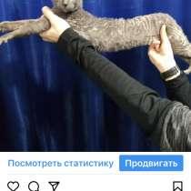 Продам котят породы Корниш рекс, в г.Алматы