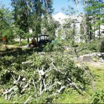 Удаление, обрезка деревьев в Истре, в Истре