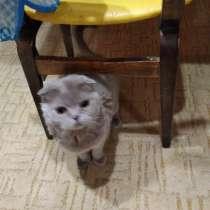 Отдам взрослую кошку, в Омске