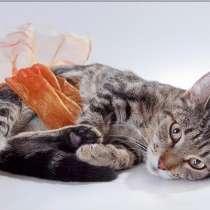 Симпатичная полосатая кошка Алиса в дар, в Москве
