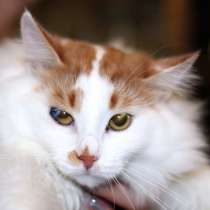 Пушистый роскошный котик Ёшка, ищет мам и пап, в Москве