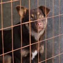 Собачка Амели- небольшая, хрупкая, нежная, в Челябинске
