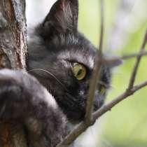 Котёнок, в Чите