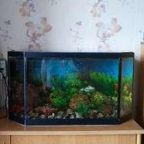 Продам аквариум для рыбок, в Красноярске